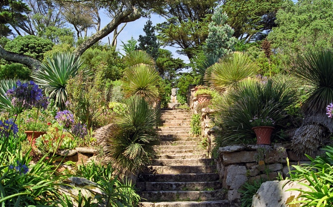 Tresco Abbey Gardens, Scilly Isles, UK Looking at the plants in this garden it is difficult to believe that Tresco Abbey Gardens is situated in the British Isles. Containing sub-tropical plants from Australia, South Africa and South America – including Echiums, Agaves, Aloes, Proteas, Aeoniums, Strelitzias and palm trees, this garden looks as though it should be situated in the Mediterranean! However, it is located in England, on the small island of Tresco in the Scilly Isles (approximately 28 miles from the south west tip of Cornwall in the United Kingdom). The photographs in this set where taken in late August when a lot of the color had already left the gardens. However, the varied planting provides a superb example of the value of a clear garden structure filled with diverse and contrasting foliage – creating a wonderful green tapestry of architectural plants throughout the year. Details: With a stunning background of white sandy beaches and vivid turquoise sea, Tresco Abbey Gardens is an outstanding historic garden set amid the romantic ruins of a 16th century priory. The gardens were started by Augustus Smith, who moved to the island in 1834. The garden has subsequently been developed by four succeeding generations of the family from Augustus Smith. The gardens have many delightful features, often seen at their best in the warmth of the afternoon sun, ranging from the Abbey arch, the Neptune steps, the shell house and a number of tastefully placed sculptures (including one to the earth goddess Gaia), all bordered by fantastic foliage of varying shapes, textures, sizes and hues. Surrounded by sea and in the warmth of the Gulf Stream the climate is exceptionally mild and totally frost free in most years. With south facing terraces, these gardens have often been referred to as 'Kew gardens without the roof', because in mainland UK, you would only find these plants in a botanical garden glass house. Location: Tresco Abbey Gardens, Tr