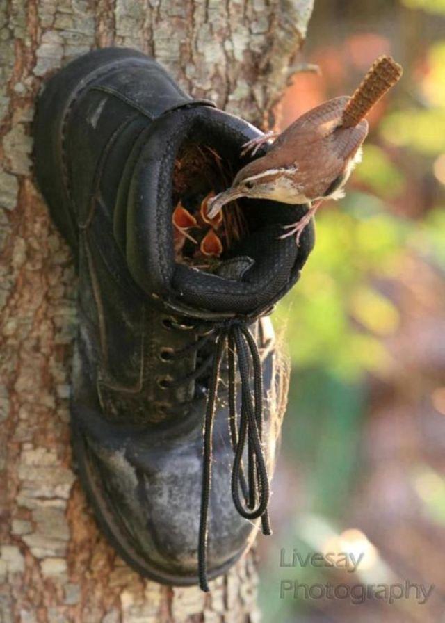 shoe nest