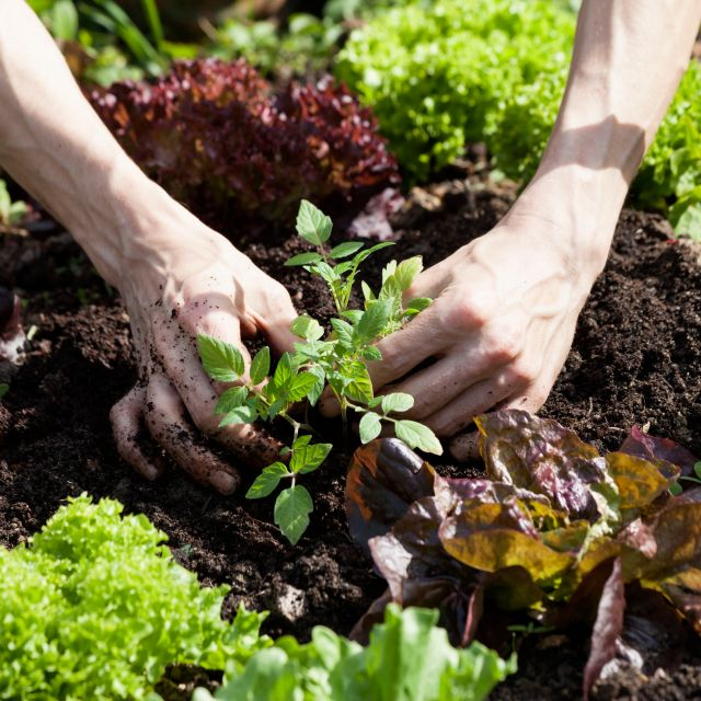 planting-vegetables-and-herbs