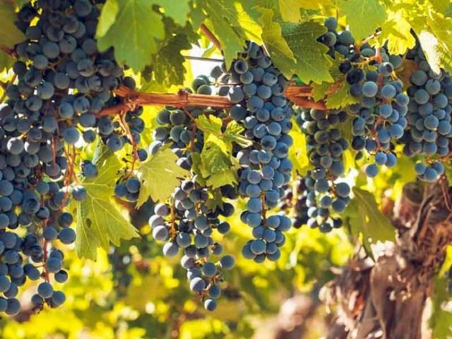 vine climber 10