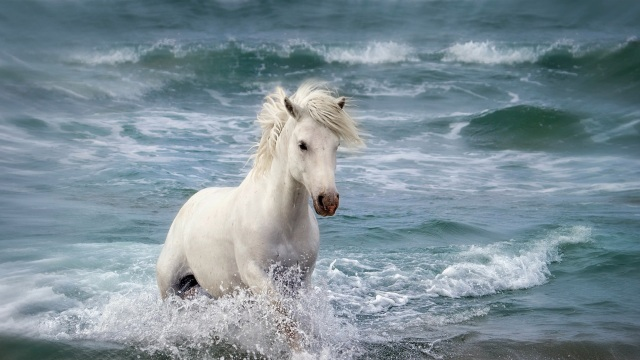 White-horse-in-the-sea-waves